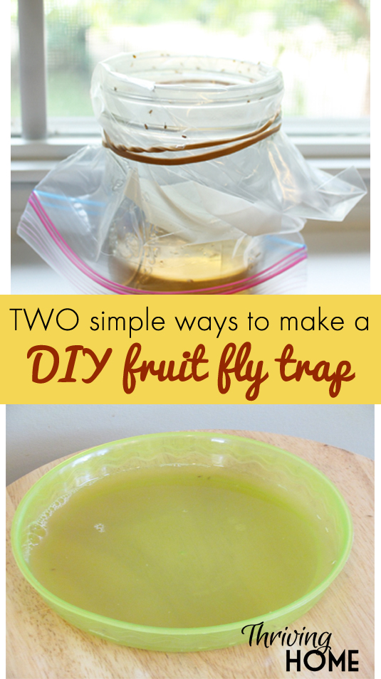 ways to make a fruit fly trap