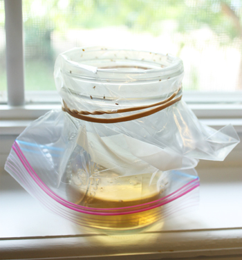 Easy DIY Fruit Fly Traps