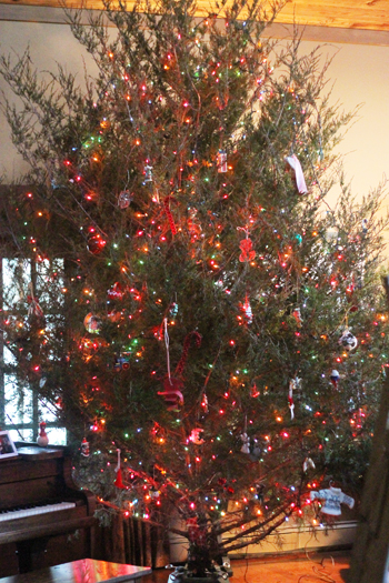 Make this Christmas tree water and be amazed at how long your real tree lasts.