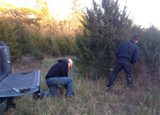 Two men Looking for a Christmas Tree
