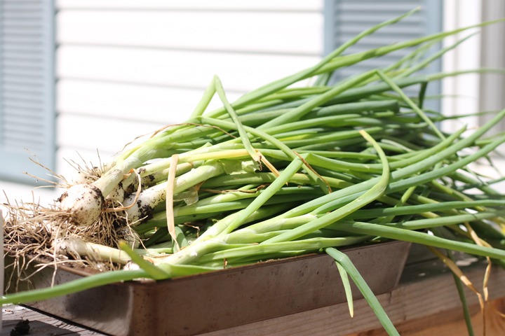 Freeze green onions for later use in cooking and baking!