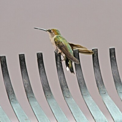 How to Get a Hummingbird Out of a Garage