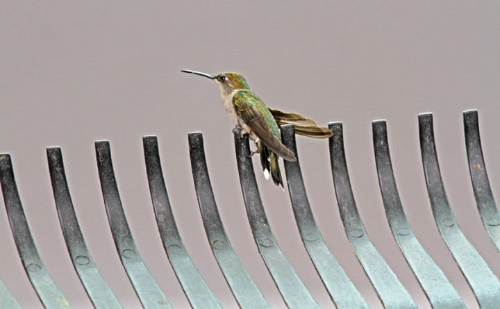 How to Get a Hummingbird Out of a Garage | Thriving Home