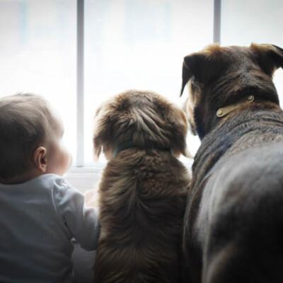 Profound Pups