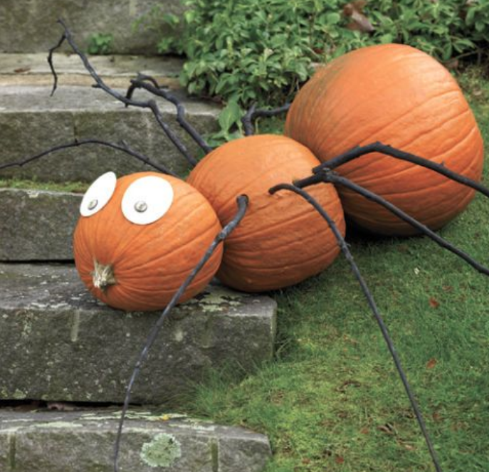 Pumpkin spider craft for kids using sticks and real pumpkins
